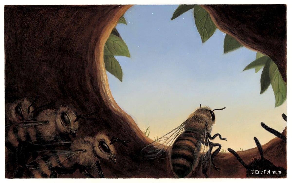 Honeybee by Eric Rohmann